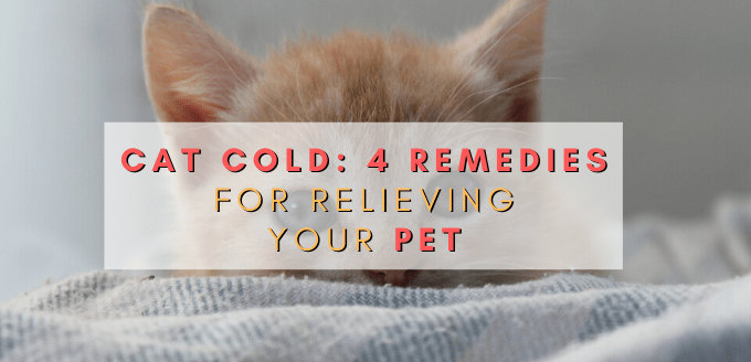 Cat Cold_ 4 Remedies for Relieving Your Pet