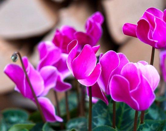 35 Most Stunning Purple Flower Plants - WikiJunkie