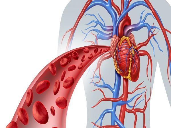 Blood Heart Circulation
