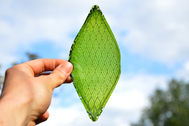Artificial leaf can make oxygen in space with water and light