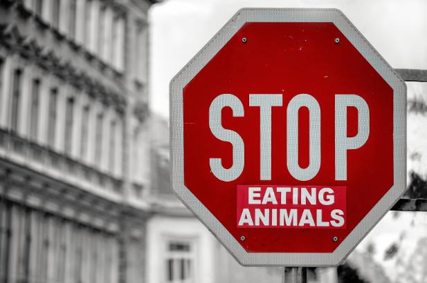 Vegan Mindset