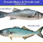 Cuales son los pescados azules y cuales son pescado blanco.