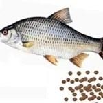 Cómo se reproducen los peces