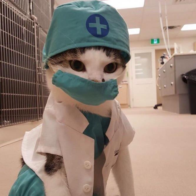 Common Cat Allergies: Causes, Symptoms and Treatments 1