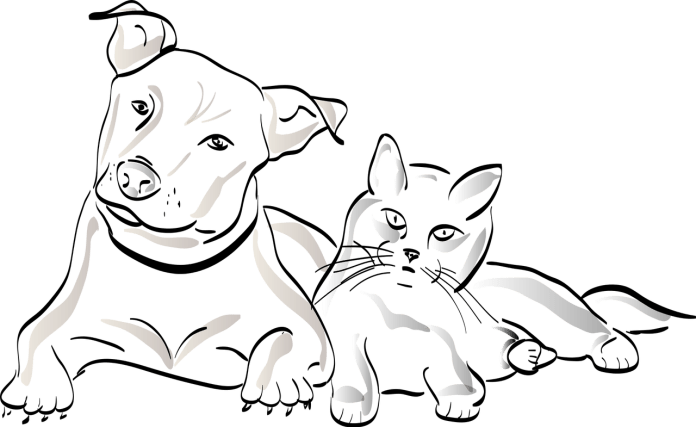 What are the Health Benefits of Owning a Pet 3