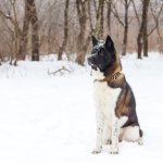 Akita puppy - 10 Best Guard Dogs to Protect Your Family and Home