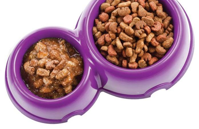 Wet Food Vs. Dry Food For Dogs? How to Choose the Best for Your Pet 1