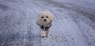 Cold Weather Can Affect Your Dog