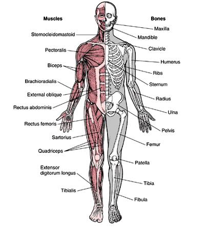cum se tratează artroza de gradul 4