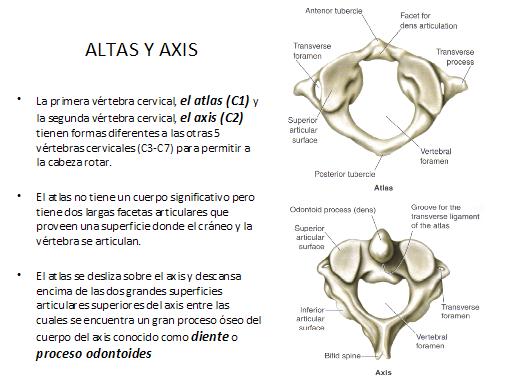atlas, axis