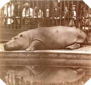 The Hippo.