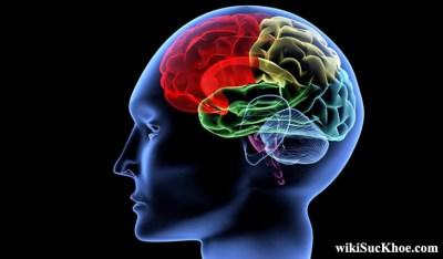 Bệnh chấn động não: Khái niệm, nguyên nhân, triệu chứng, điều trị, cách phòng ngừa