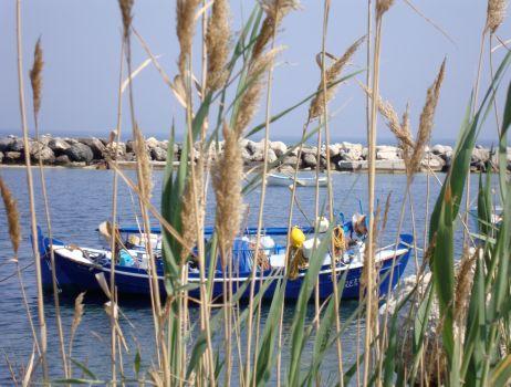 Blue Boat 4