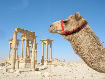 Palmyra20