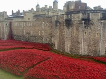Rememberance poppies