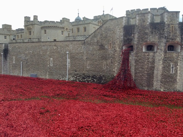 Remembrance Poppies, Tower of London