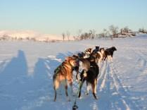 Dog Sledding near Tromso, Norway