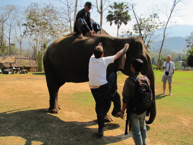 Elephants Laos 2