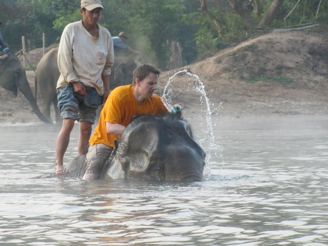 Elephants Laos 3