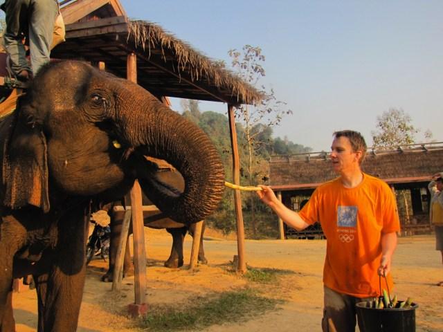 Elephants Laos4