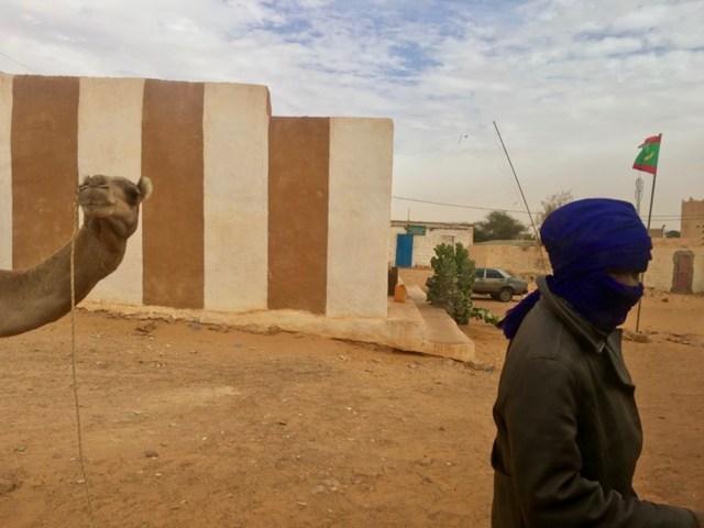 Mauritania Camel