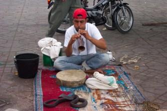 Marrakech Snake Charmer