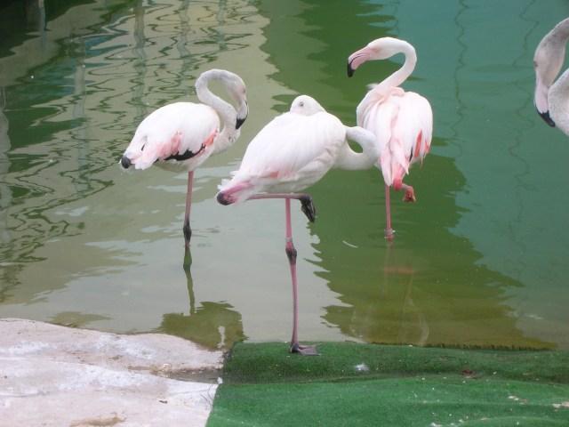 Flamingoes, Valencia, Spain