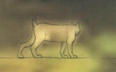 Wild Things ontvangt eerste beelden van lynx!