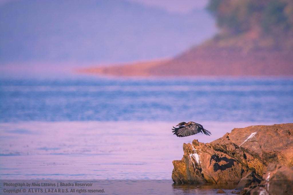 Bhadra Wildlife Sanctuary river tern resort