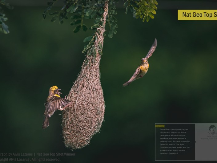 Nat Geo Editor Favorite Wildlife Moments