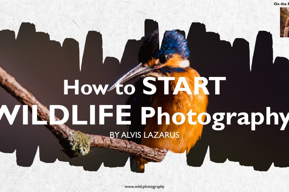 Step By Step Explanation On How To Start Wildlife Photography Alvis Lazarus
