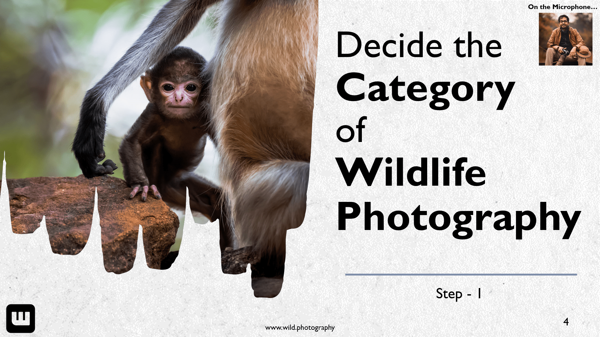 Decide the category of wildlife photography