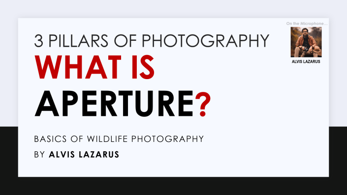 What is Aperture 3 Pillars of Photography Wild Photography Alvis Lazarus