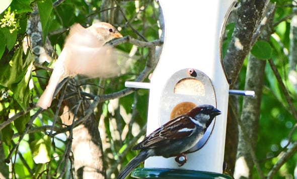 wild birds on birdfeeder