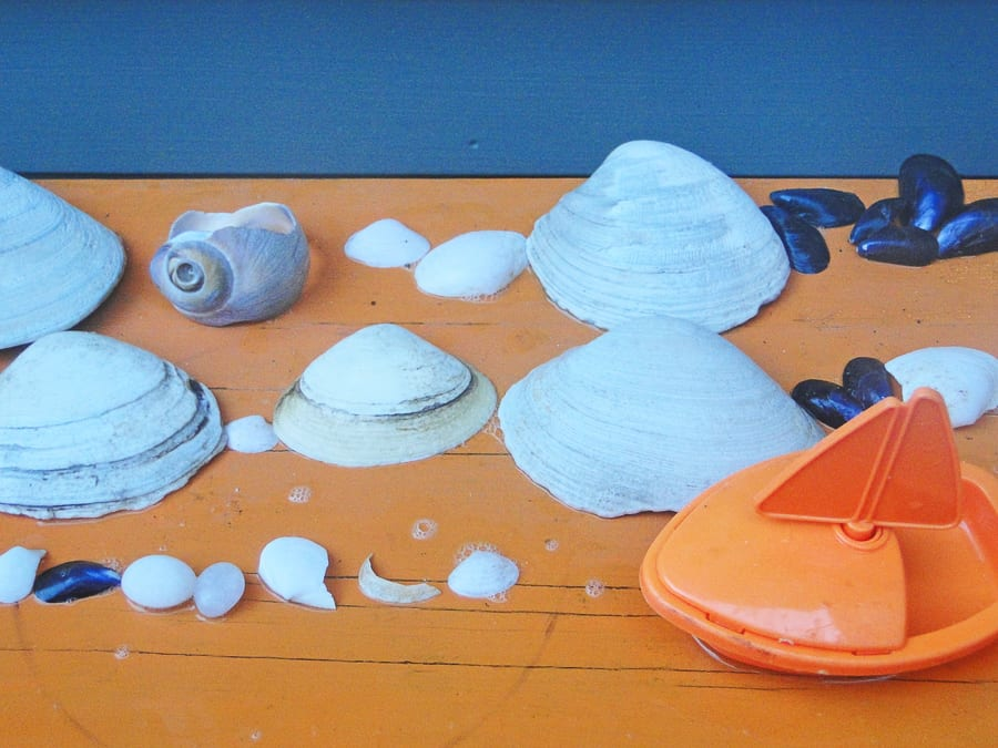 beach walk with kids shell collection