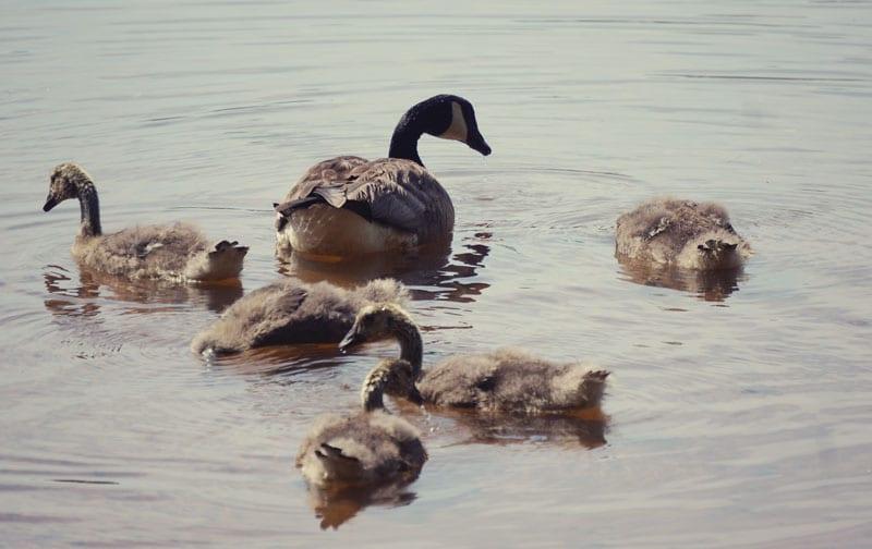 Goslings Otter Pond