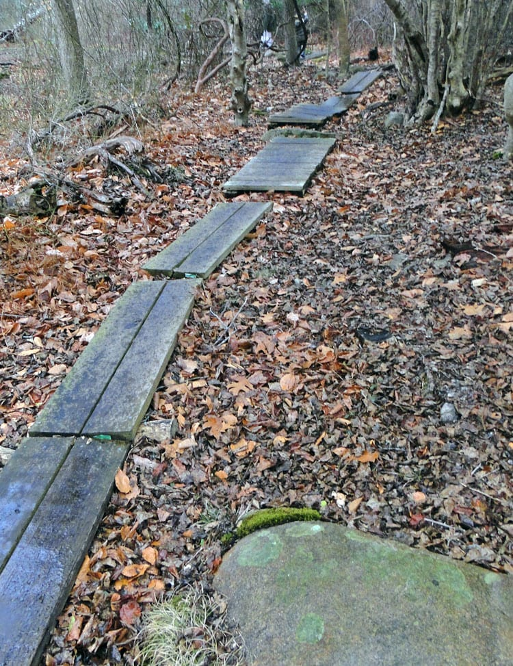 wood path Montauk Point State Park
