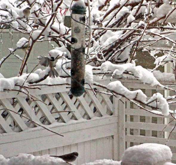 birds snow birdfeeder