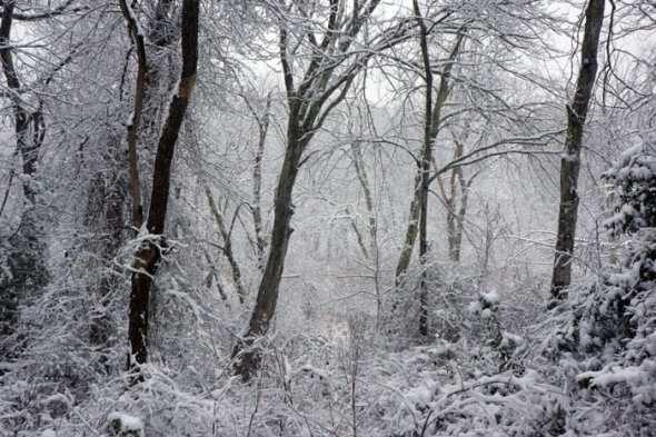 winter wonderland woods
