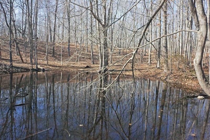 Salamander hunt vernal pond reflections
