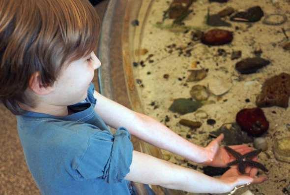 holding starfish in SOFO starfish