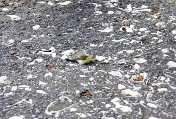 little bird on pavement