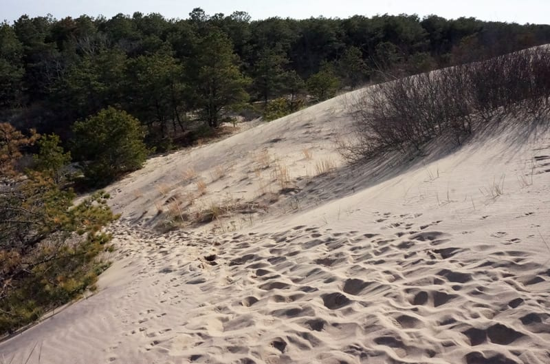 The Walking Dunes and forest