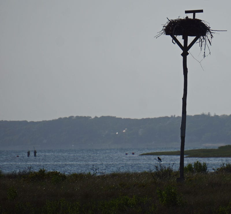 silhouette fishermen Osprey nest pole Munn Point