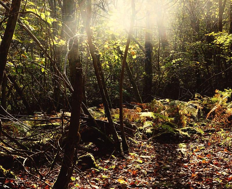 sunlight leaves deep woods