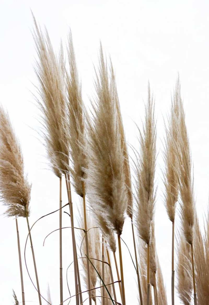 Rushes against sky