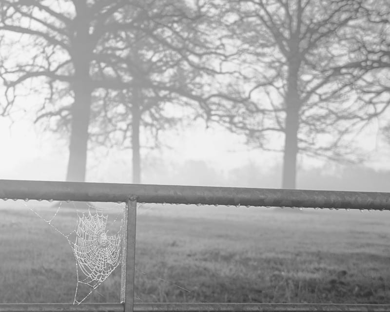 cobweb mist trees