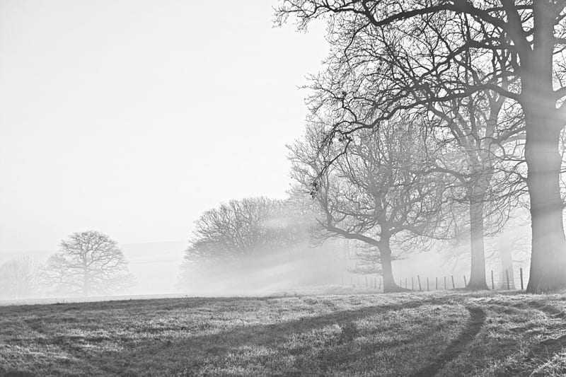 winter morning trees black and white