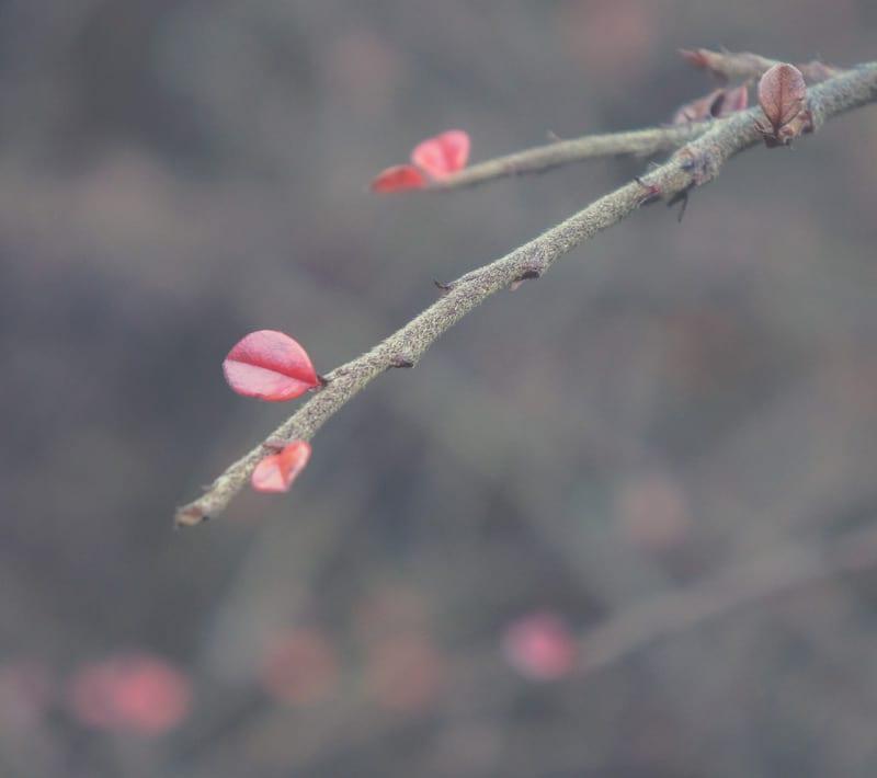 few red leaves shrub