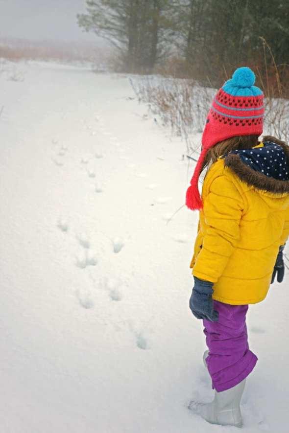 Following deer tracks in snow